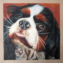 cane cavalier king charles ritratto alfio raciti derwent drawing wildlife