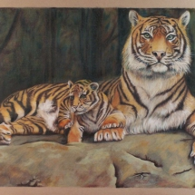 tigre mother love alfio raciti wildlife derwent drawing